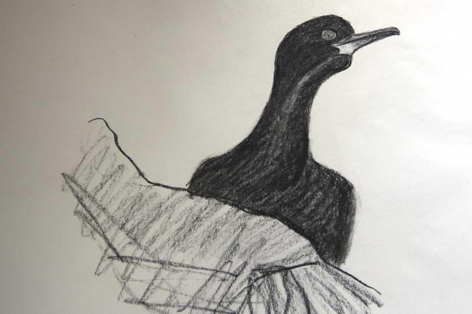 cormoran-huppe.jpg